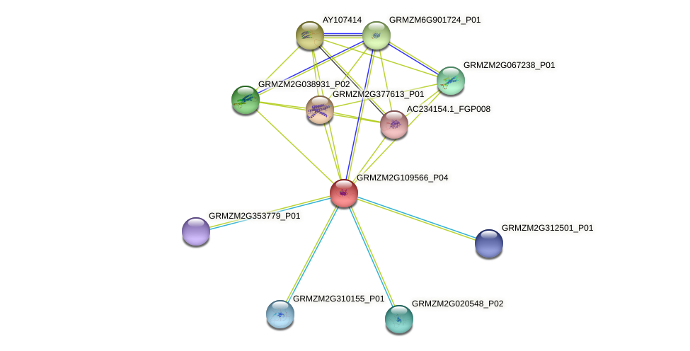 Zm.136867 protein (Zea mays) - STRING interaction network