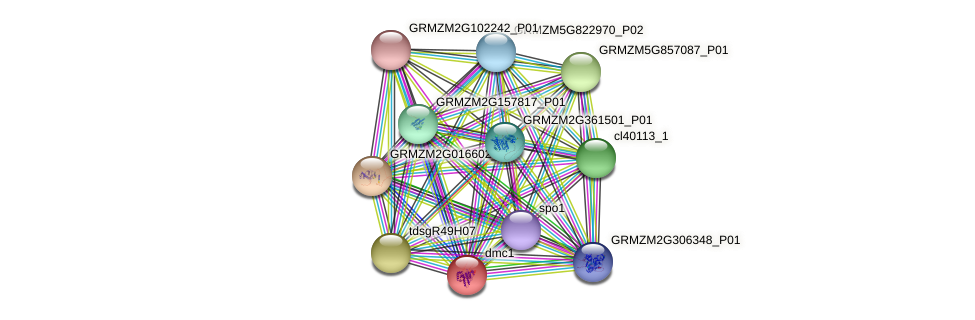 GRMZM2G109618_P01 protein (Zea mays) - STRING interaction network