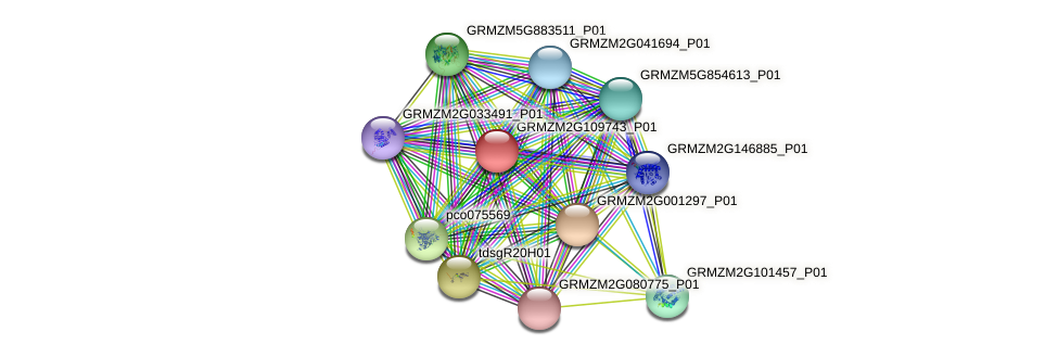 GRMZM2G109743_P01 protein (Zea mays) - STRING interaction network