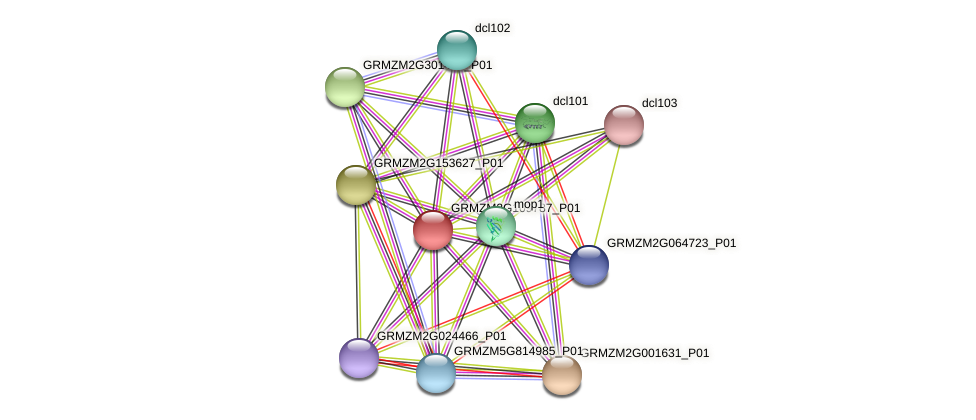 GRMZM2G109787_P01 protein (Zea mays) - STRING interaction network