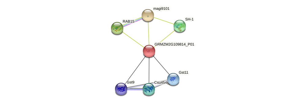 GRMZM2G109814_P01 protein (Zea mays) - STRING interaction network