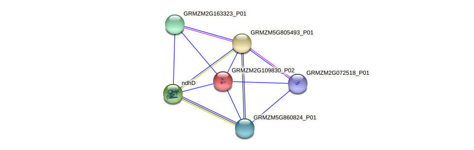 GRMZM2G109830_P02 protein (Zea mays) - STRING interaction network