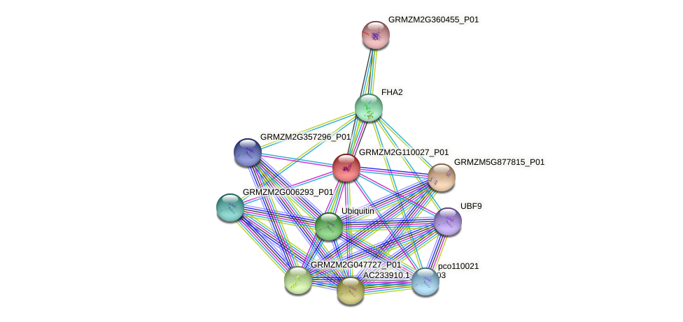 GRMZM2G110027_P01 protein (Zea mays) - STRING interaction network