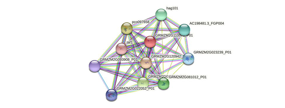 GRMZM2G110076_P01 protein (Zea mays) - STRING interaction network