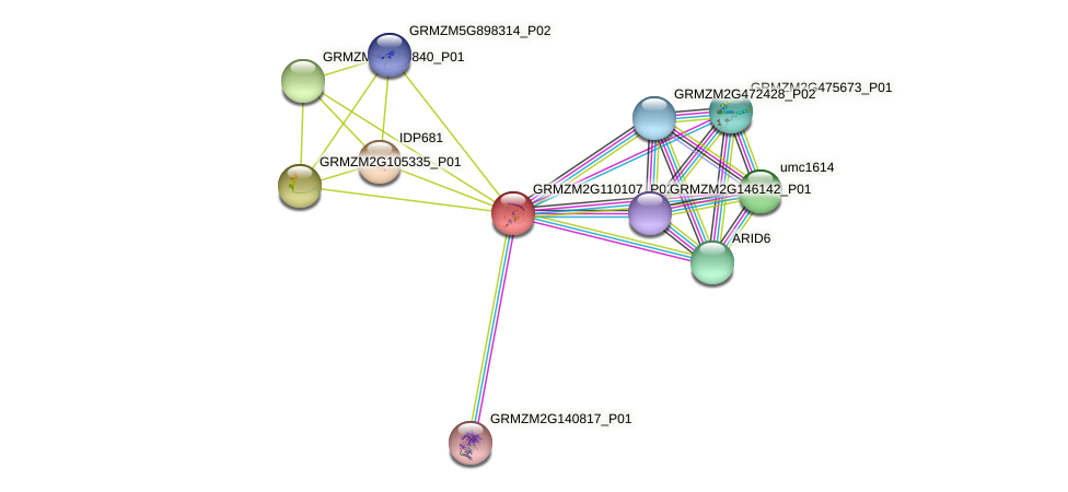 GRMZM2G110107_P02 protein (Zea mays) - STRING interaction network