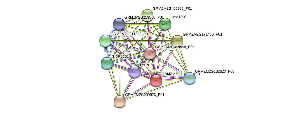 GRMZM2G110116_P01 protein (Zea mays) - STRING interaction network