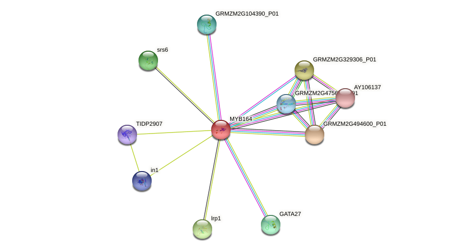 MYB164 protein (Zea mays) - STRING interaction network