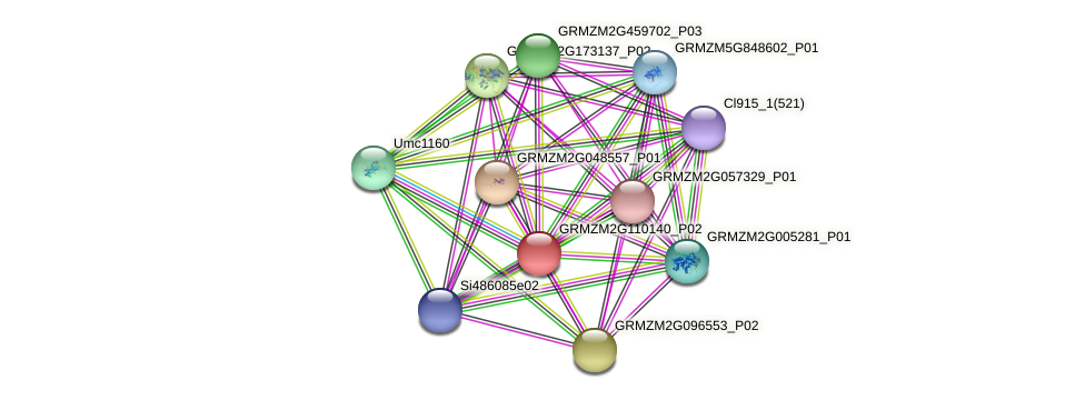 GRMZM2G110140_P02 protein (Zea mays) - STRING interaction network