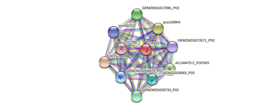 GRMZM2G110185_P02 protein (Zea mays) - STRING interaction network