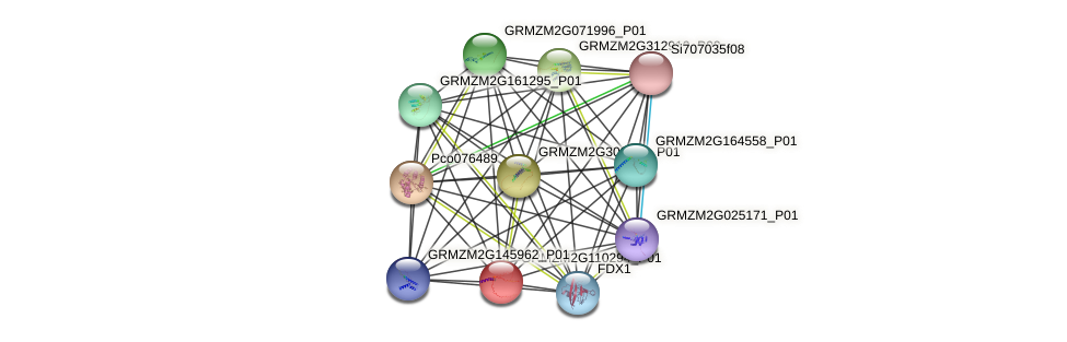 GRMZM2G110294_P01 protein (Zea mays) - STRING interaction network