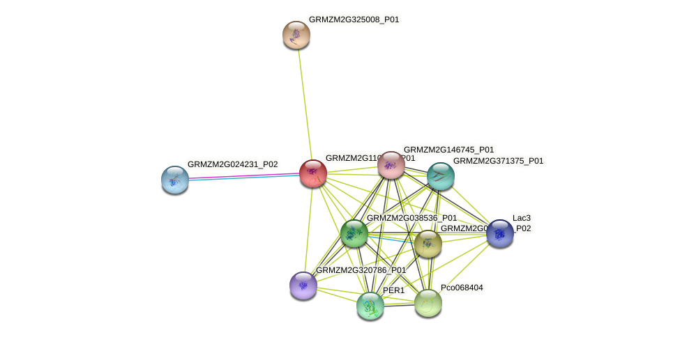 Zm.131838 protein (Zea mays) - STRING interaction network
