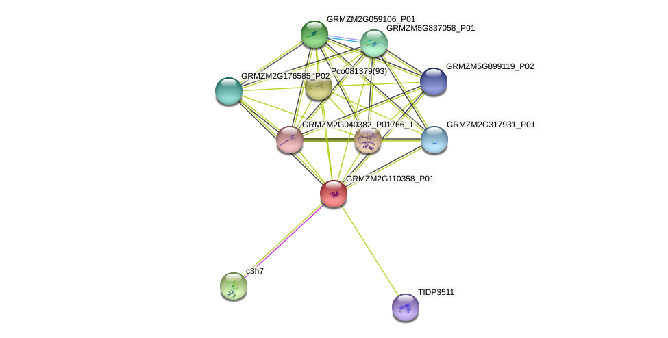 GRMZM2G110358_P01 protein (Zea mays) - STRING interaction network