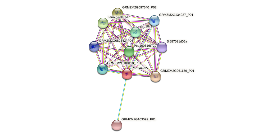 pco144235 protein (Zea mays) - STRING interaction network