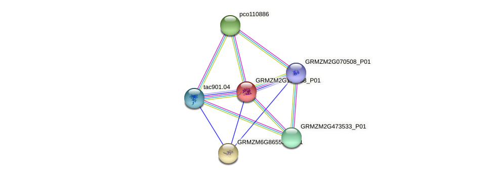 GRMZM2G110388_P01 protein (Zea mays) - STRING interaction network