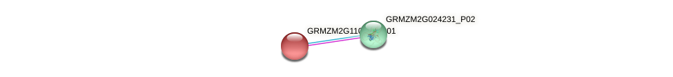 GRMZM2G110421_P01 protein (Zea mays) - STRING interaction network