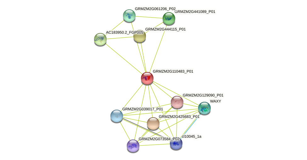 GRMZM2G110483_P01 protein (Zea mays) - STRING interaction network