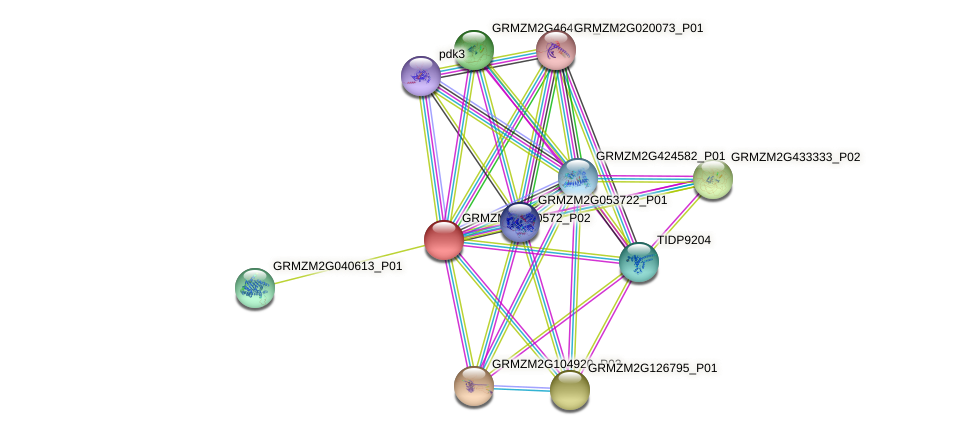 GRMZM2G110572_P02 protein (Zea mays) - STRING interaction network