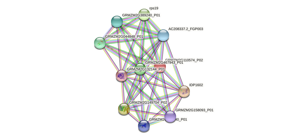 GRMZM2G110574_P02 protein (Zea mays) - STRING interaction network