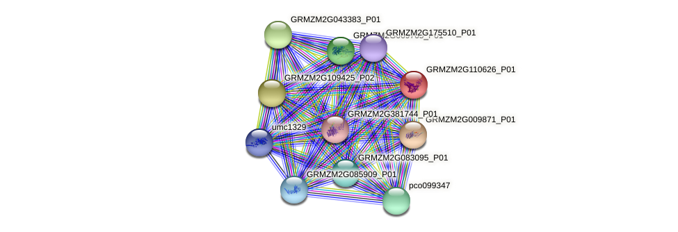GRMZM2G110626_P01 protein (Zea mays) - STRING interaction network