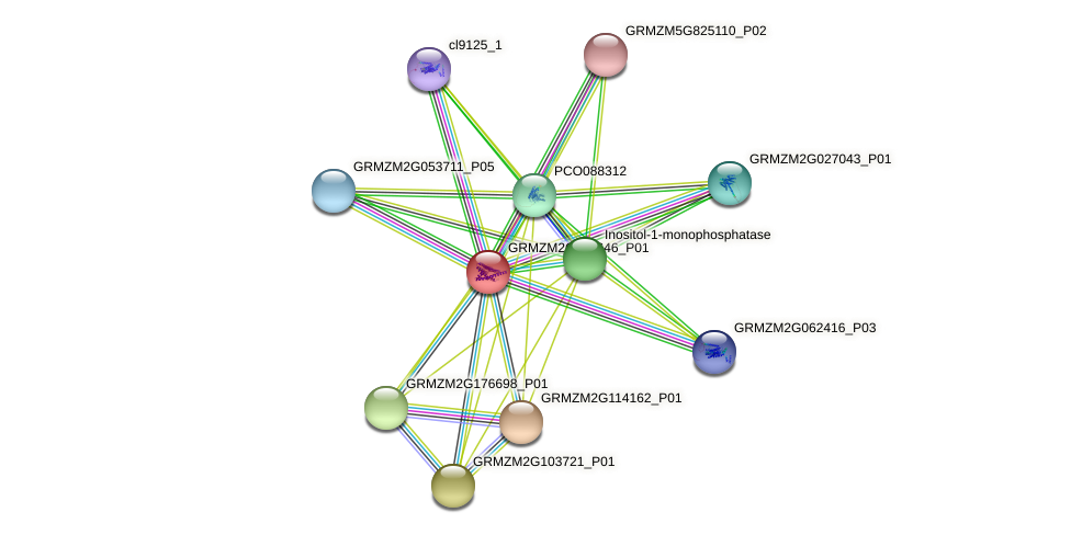 PIS protein (Zea mays) - STRING interaction network
