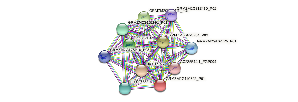 GRMZM2G110822_P01 protein (Zea mays) - STRING interaction network