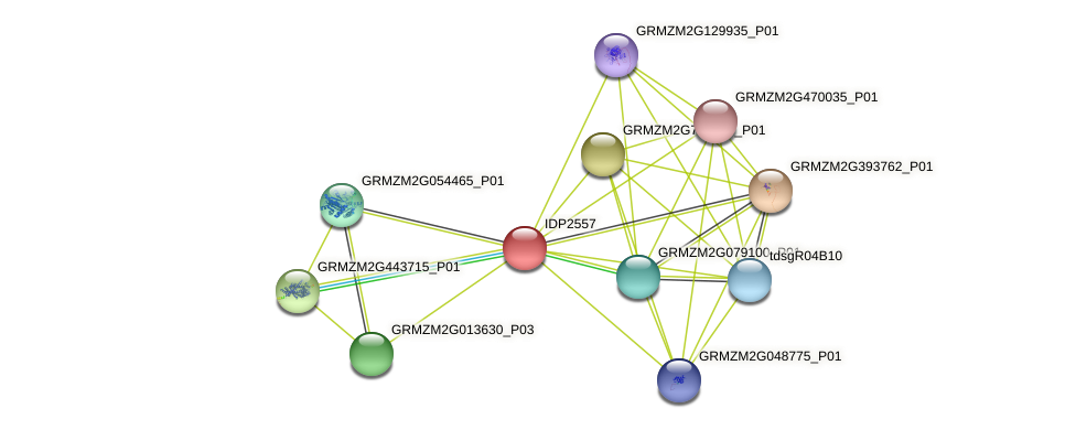 IDP2557 protein (Zea mays) - STRING interaction network