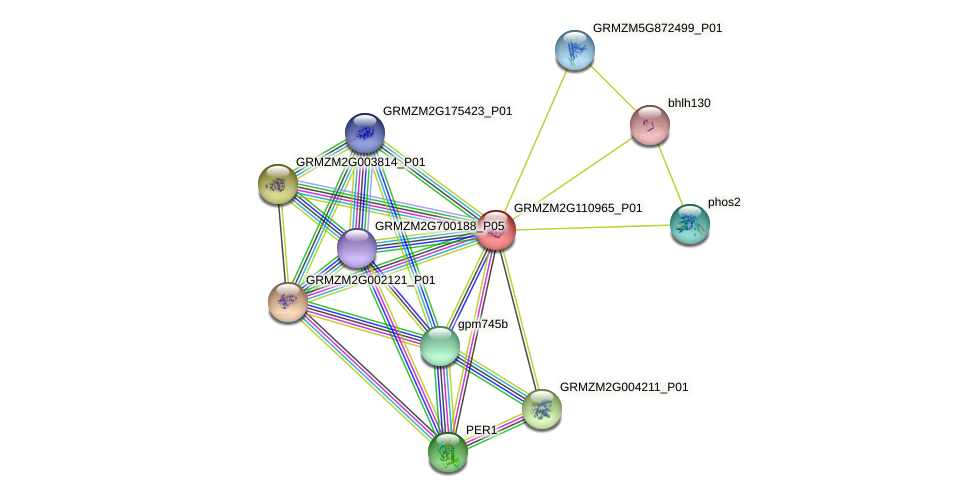 GRMZM2G110965_P01 protein (Zea mays) - STRING interaction network