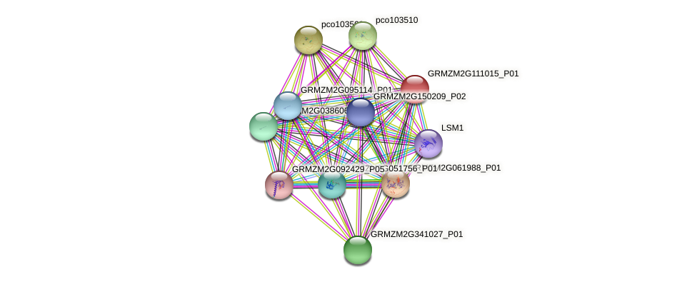 GRMZM2G111015_P01 protein (Zea mays) - STRING interaction network