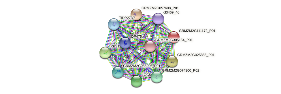 GRMZM2G111172_P01 protein (Zea mays) - STRING interaction network
