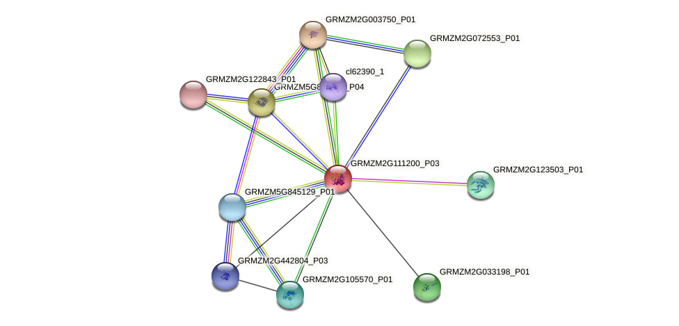 GRMZM2G111200_P01 protein (Zea mays) - STRING interaction network