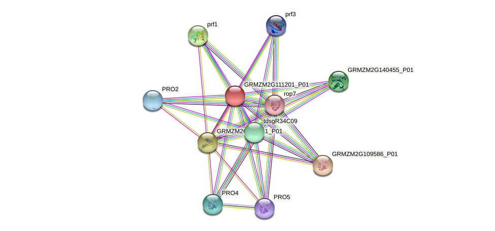 GRMZM2G111201_P01 protein (Zea mays) - STRING interaction network