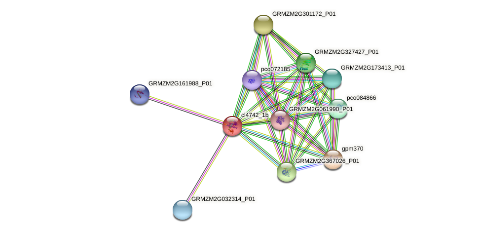 cl4742_1b protein (Zea mays) - STRING interaction network