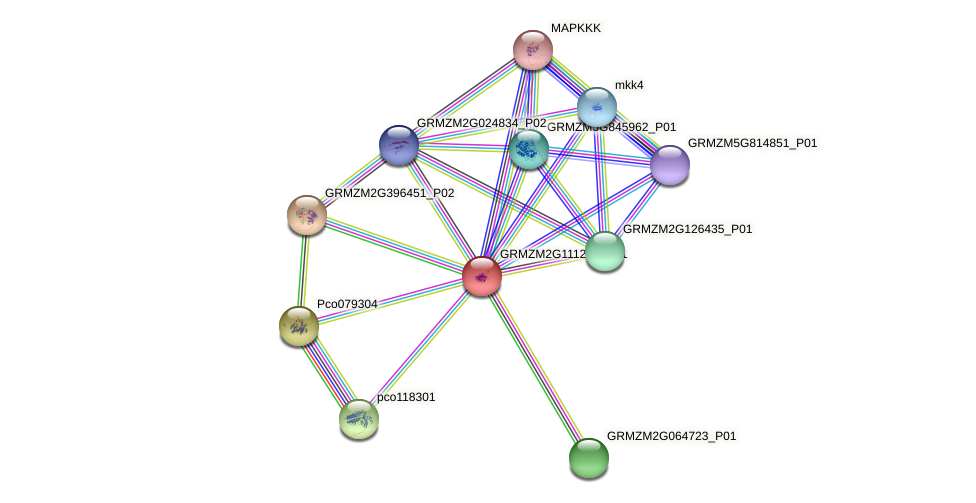 Orphan1 protein (Zea mays) - STRING interaction network