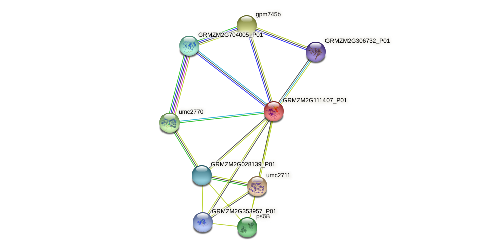 GRMZM2G111407_P01 protein (Zea mays) - STRING interaction network