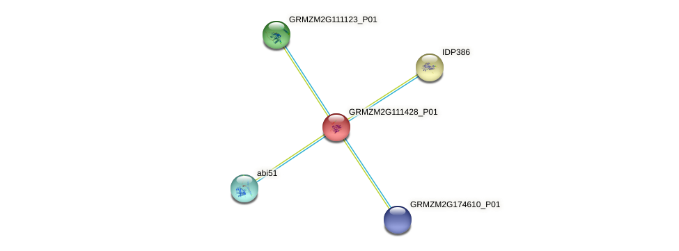 GRMZM2G111428_P01 protein (Zea mays) - STRING interaction network