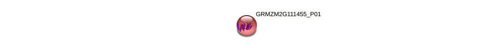 GRMZM2G111455_P01 protein (Zea mays) - STRING interaction network