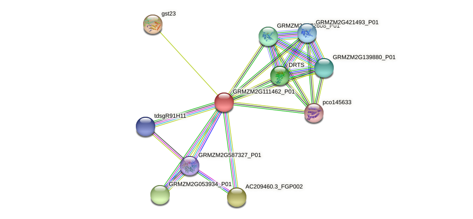 GRMZM2G111462_P01 protein (Zea mays) - STRING interaction network