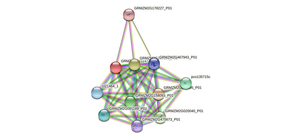 GRMZM2G111477_P01 protein (Zea mays) - STRING interaction network