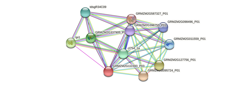 GRMZM2G111593_P03 protein (Zea mays) - STRING interaction network