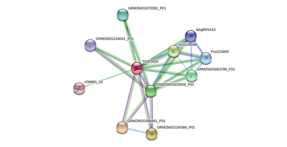 TIDP2929 protein (Zea mays) - STRING interaction network