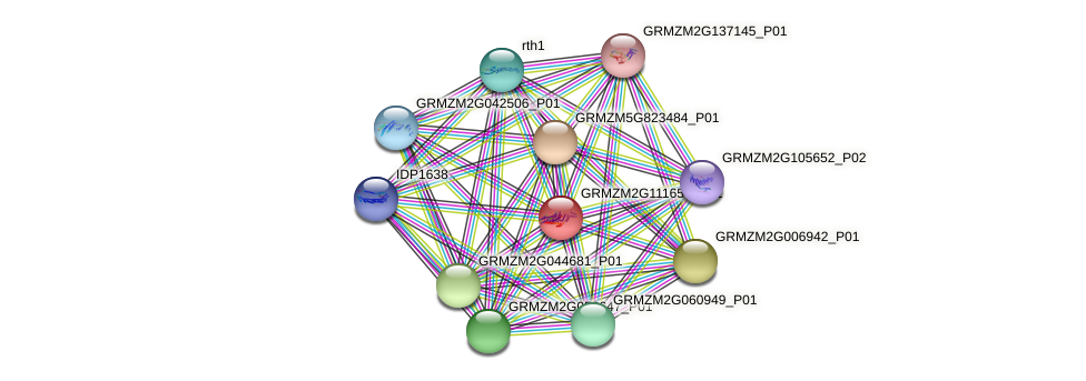 GRMZM2G111657_P01 protein (Zea mays) - STRING interaction network