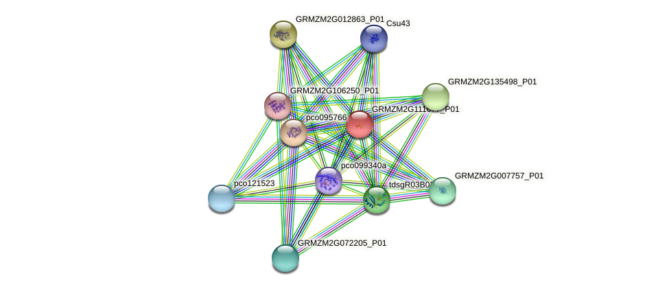 GRMZM2G111677_P01 protein (Zea mays) - STRING interaction network