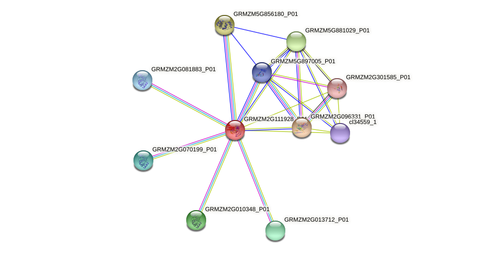 GRMZM2G111928_P01 protein (Zea mays) - STRING interaction network