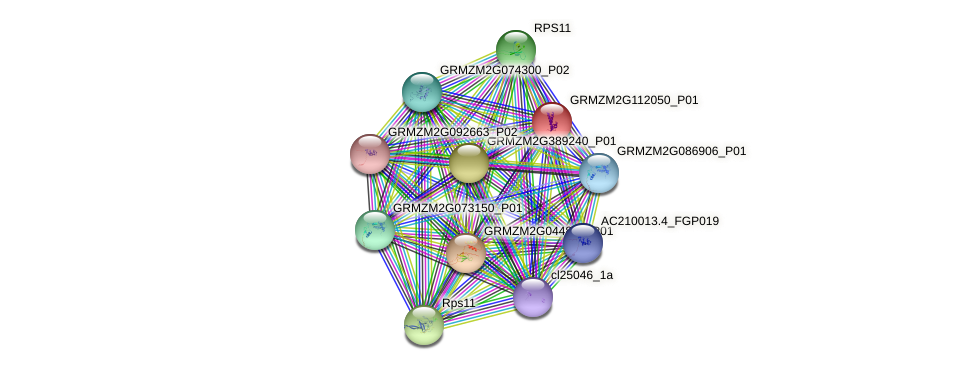 GRMZM2G112050_P01 protein (Zea mays) - STRING interaction network