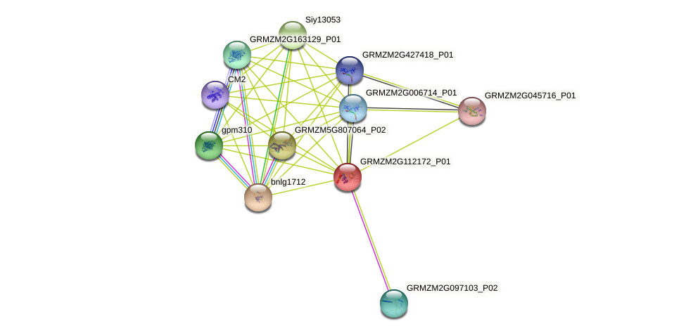 GRMZM2G112172_P01 protein (Zea mays) - STRING interaction network