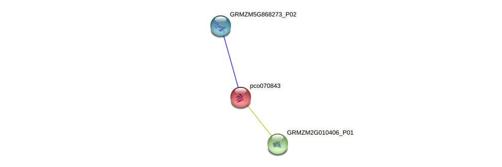 pco070843 protein (Zea mays) - STRING interaction network