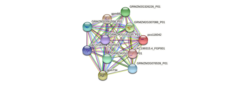 pco116042 protein (Zea mays) - STRING interaction network
