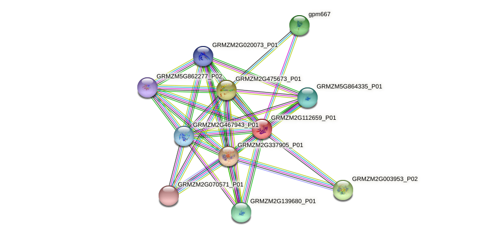 100191407 protein (Zea mays) - STRING interaction network