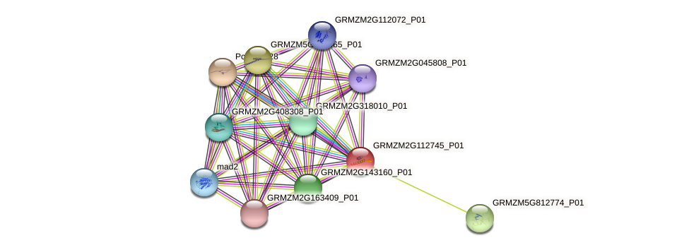 GRMZM2G112745_P01 protein (Zea mays) - STRING interaction network