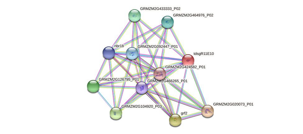 GRMZM2G112756_P01 protein (Zea mays) - STRING interaction network